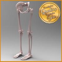 human leg skeleton 3d model