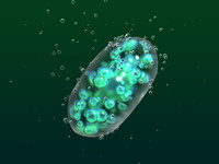 cyanobacterium oxygen photosynthesis 3d c4d