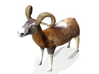 3d bighorn ram model