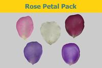 Rose petal