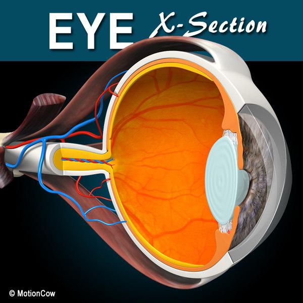 X-Section_Eye_A.jpg