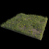 field grass dandelions 3d model
