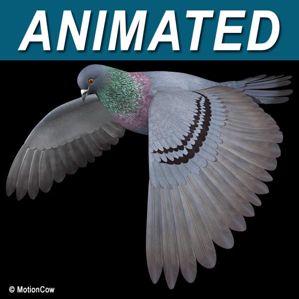 Pigeon_A01.jpg
