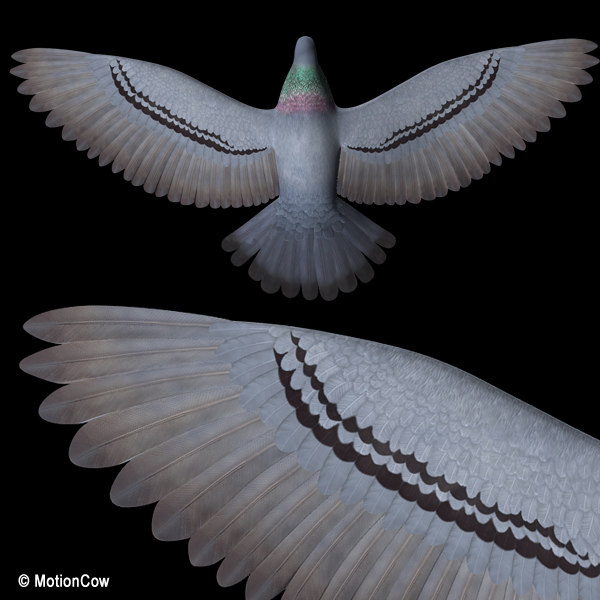 3d flying pigeon - Pigeon A ( Flying )... by MotionCow