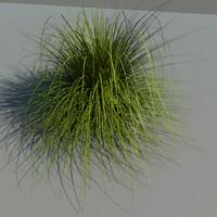 japanese silver grass 3d model
