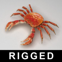 3ds max rigged crab