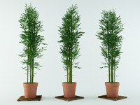 3ds max bamboo bush