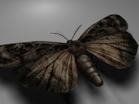3d moth alpha