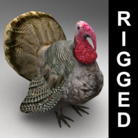 3d rigged turkey