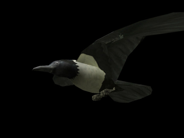 3d crow wing animations - Crow... by PandaStudio
