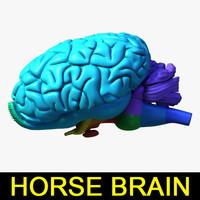 Equine Brain