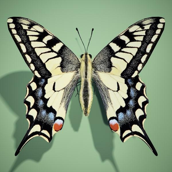 Butterfly swallowtail(1)