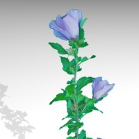 purple flower 2048 max