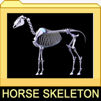 3d horse skeleton separated bones