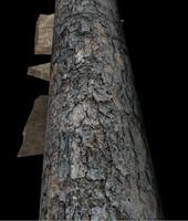 free wooden signs arrow 3d model