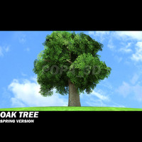 Oak Tree -Spring version-