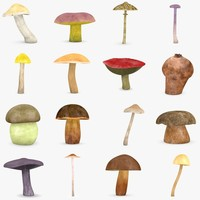 3d mushrooms food boletus model