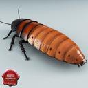 madagascar hissing cockroach 3D models