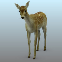 3d photorealistic deer animation model