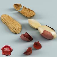 peanut v2 3d model