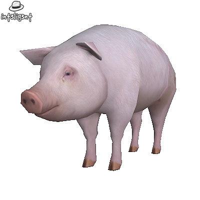 Pig01.jpg