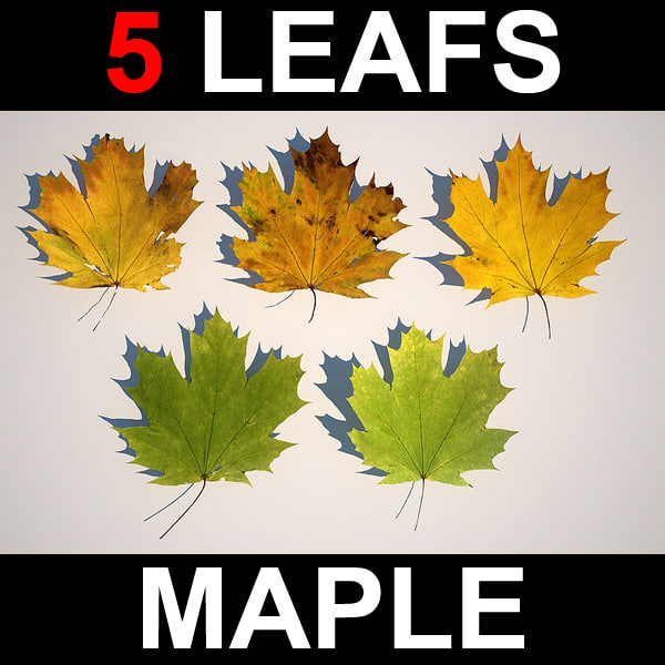 leafs_maple_screen.jpg