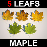 maya 5 maple leafs