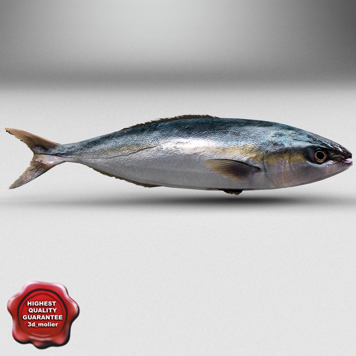 Herring_Fish_00.jpg