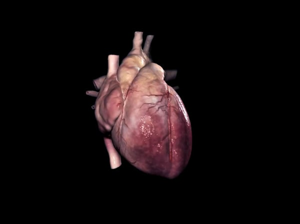human heart 3d model - Human heart... by Leppee