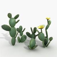 Plant Opuncia