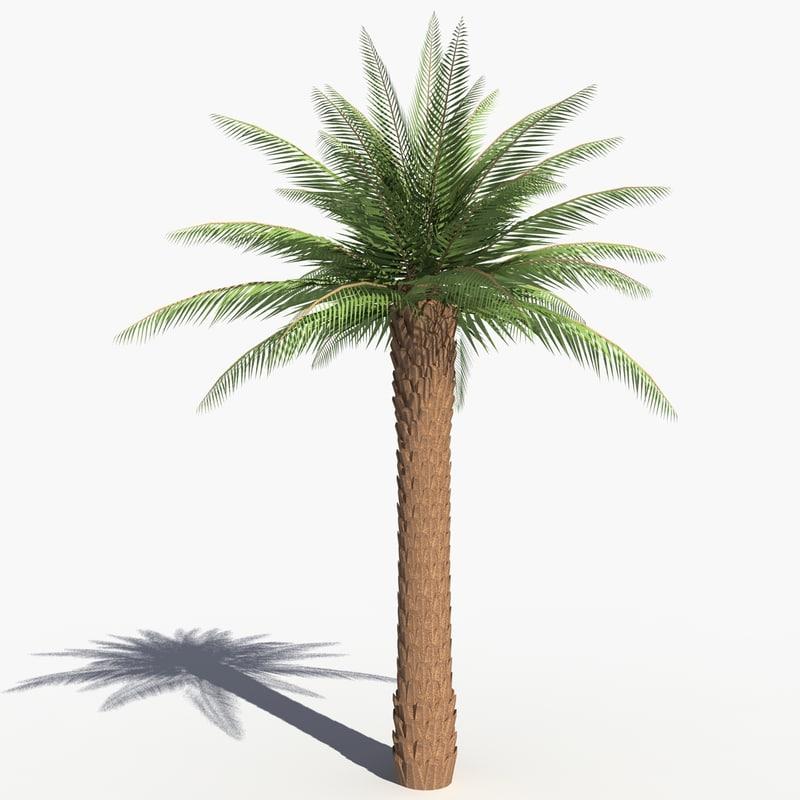 solarseas_palm_tree-.jpg