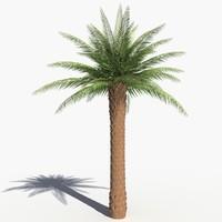 3dsmax realistic palm tree