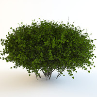 continuation bush 3d max