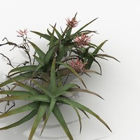 3d aloe south tropical