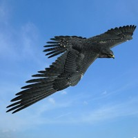 peregrine falcon max