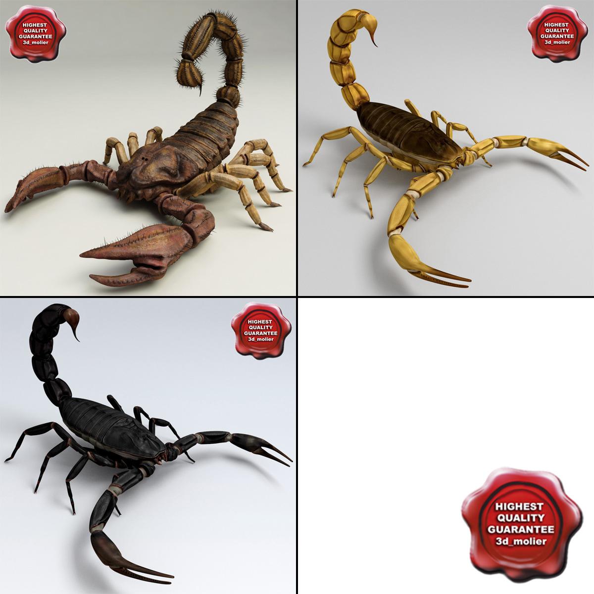 Scorpions_Collection_00.jpg