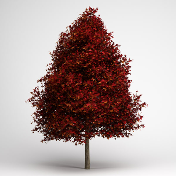 red american sweetgum 10 3d max - CGAxis Red American Sweetgum 10... by cgaxis