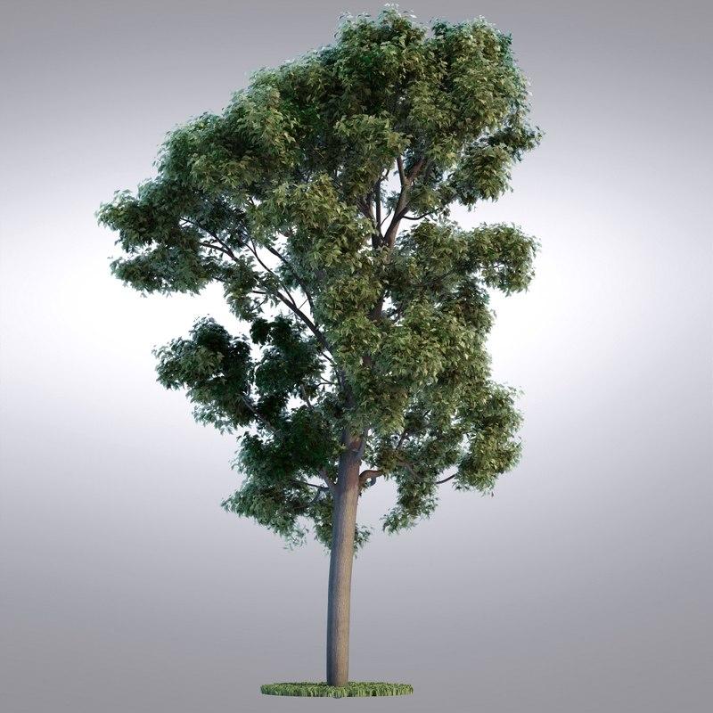 tree102_0001.jpg