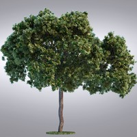 HI Realistic Series Tree - 095