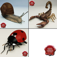 Insects Collection V5