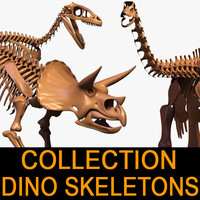 Dino skeleton Collection