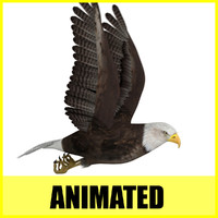 Eagle - Animated