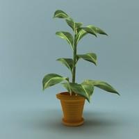 3d pot ficus