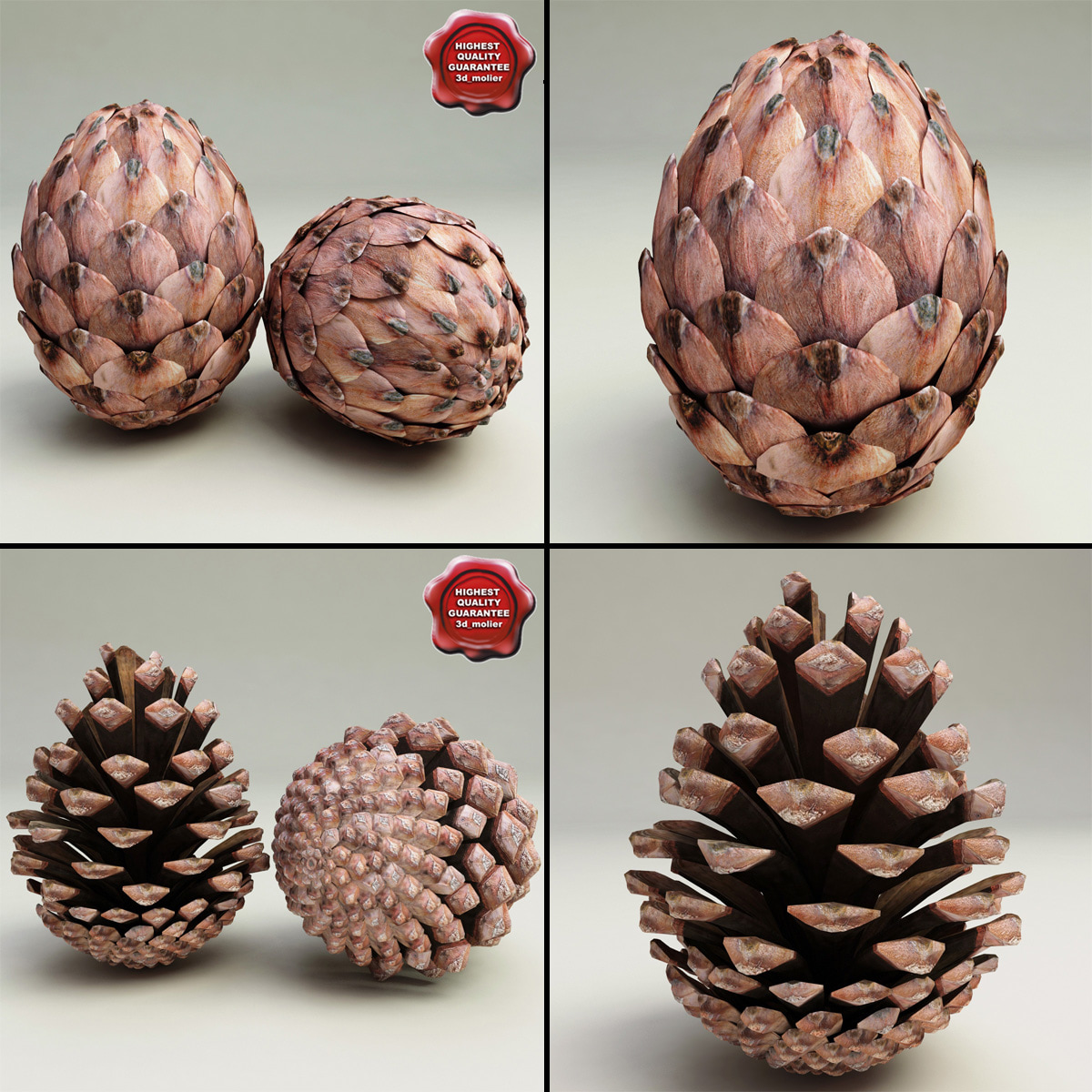 Fir_Cones_Collection_00.jpg