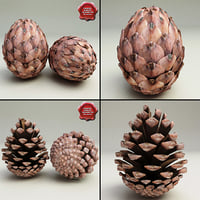 Fir Cones Collection
