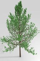 simple tree 3ds