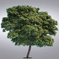 3d hi realistic series tree model