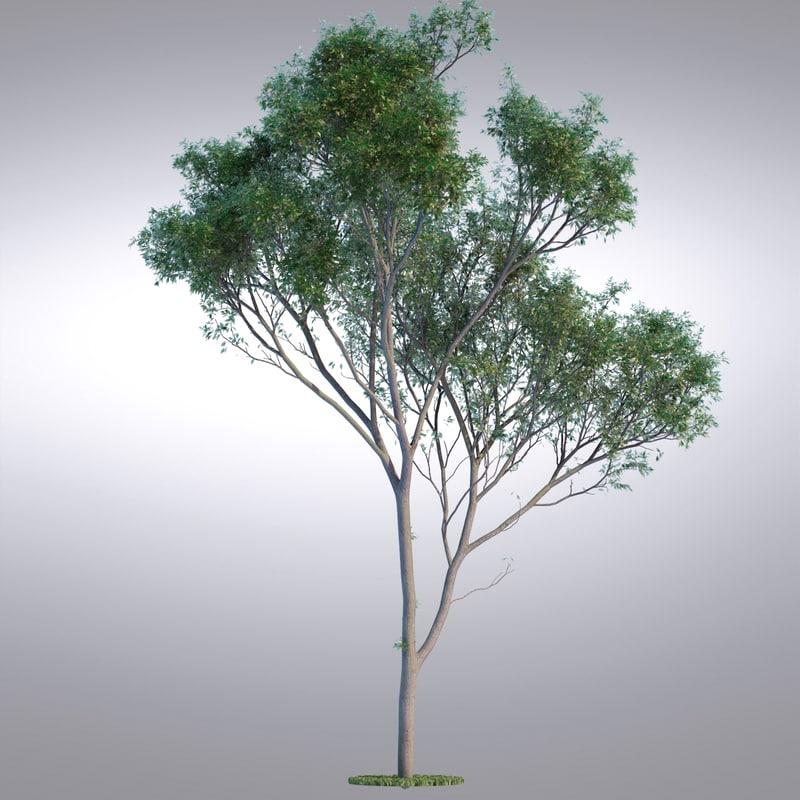 tree117_0001.jpg