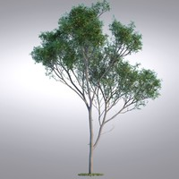HI Realistic Series Tree - 017