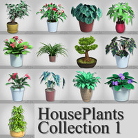 houseplants 1 flower plants 3d model